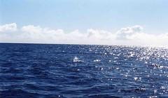 baleia a respirar