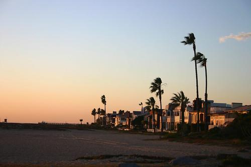 Windy Beach with Palms #2