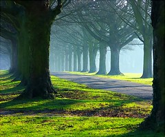 The Avenue trees in mists and sun photo by algo