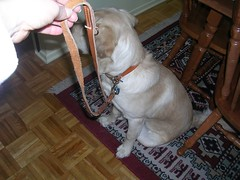 leash demo