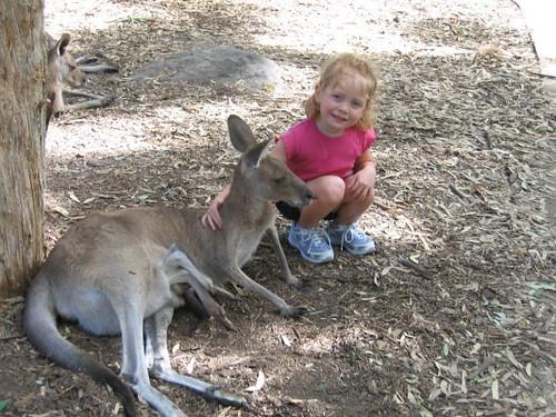 gemma_kangaroo_1