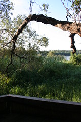 A view of the Zambezi from our room