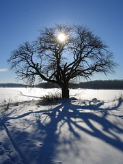Sun, tree and shadow photo by Steffe