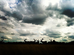 Silhouettes of deers. photo by Alain Porry