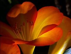 FILTERED SUNLIGHT, AUSTRALIAN TROPICAL NATIVE photo by Stephanie Patricia