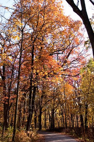 Morton Arboretum-9