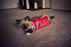 Berlioz The Haust Toast Cat photo by Robin Koning