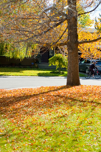 Fall Leaves Fall in Calgary