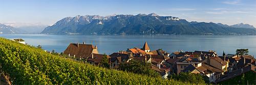 vigne-village