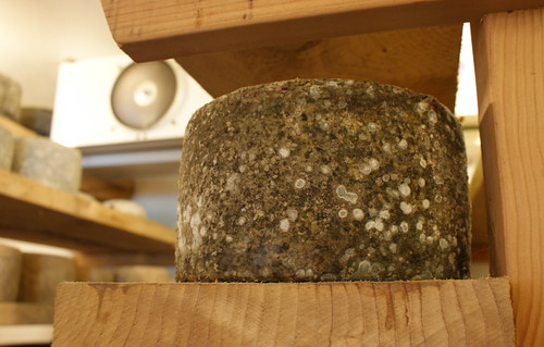 Gorgeous Estrella cheese
