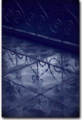 After the rain photo by seyed mostafa zamani