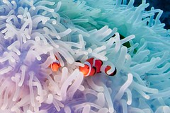 clowns and shrimp photo by Paul Cowell