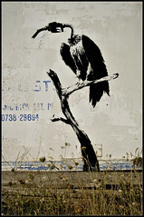 Banksy ... Dungeness . photo by insomniac2008 .