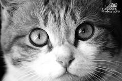 '' cat eye's '' photo by Saleh Hamadah Al-Nahabah Photography