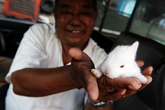 Yangon (Burma) - Good luck Bunny photo by streetcorner