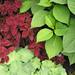 Columbia plants