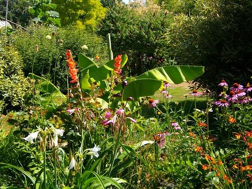 Vu jardin 10