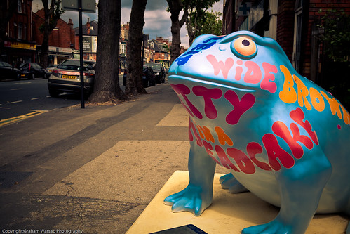 Larkin Toads in Hull-8236