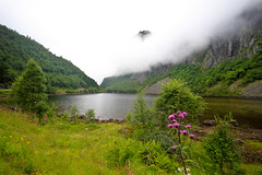 Summer in Norway: Wet and foggy photo by jensvins