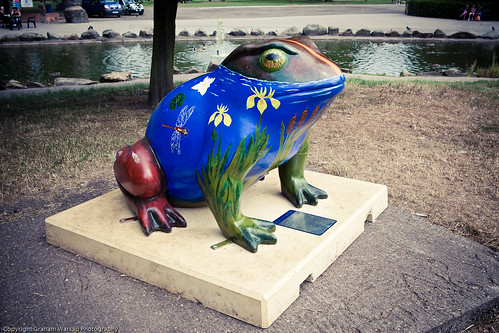 Larkin Toads in Hull-8194