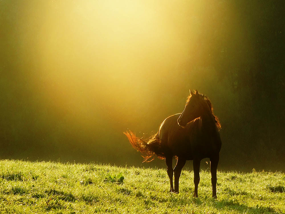 the golden moment a horse photo by ♦ Peter & Ute Grahlmann ♦
