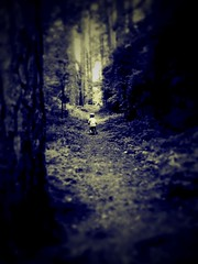 Alone? in the Forest photo by per.olesen