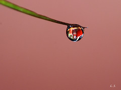 Reflection in drop photo by Lazaros2010