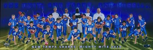 Sharks football attitude photo