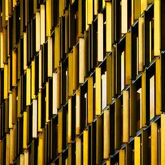 Busy Yellow photo by KeithWatt