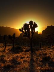 As The Sun Sets photo by Dave Toussaint (www.photographersnature.com)