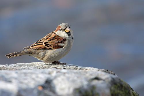 Oiseau / Bird
