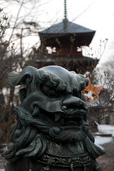 Cats and Dogs photo by Mark Liddell
