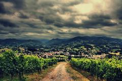 Wine Classification photo by Jurjen Harmsma Photography