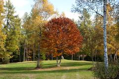Herbst bei der Pera Schupf