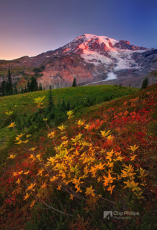 Fall Sunrise, Paradise, Mount Rainier photo by Chip Phillips