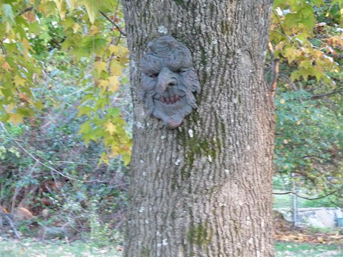 the trees have faces!