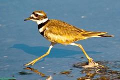 Small bird, Big step photo by Roy Prasad