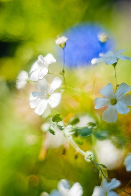 Tites Fleurs
