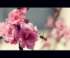 I'm a bee photo by Chealse V