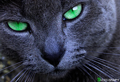 Green eye II photo by Sizzo-grafy