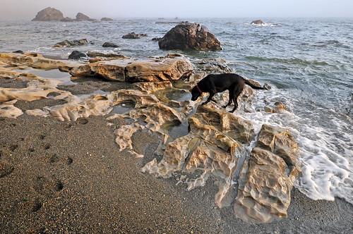 Juan de Fuca Trail, Sombrio Beach, dog