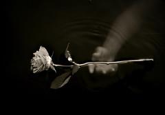 Letting Go.. photo by Silje K