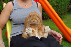 So what , never seen a sitting bunny ? photo by r2-detoo