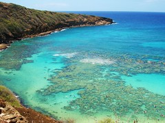 Hanauma bay   Oahu  Hawaii photo by marinfinito