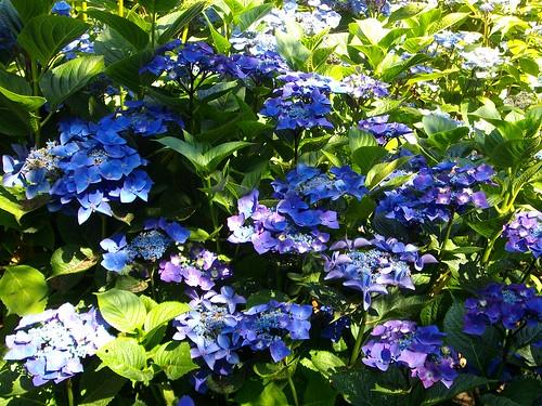 Vu jardin 6