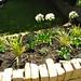 Garden Done XI