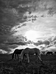 black & white (Grottammare) photo by Franco Marconi