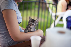 Kitten photo by neatmummy
