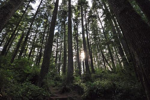 Juan de Fuca Trail,Paysant Creek, forest