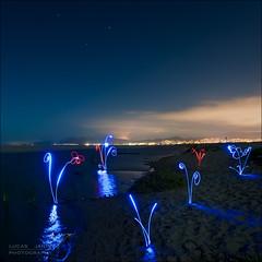 Plants of light photo by Lucas Janin | www.lucas3d.com